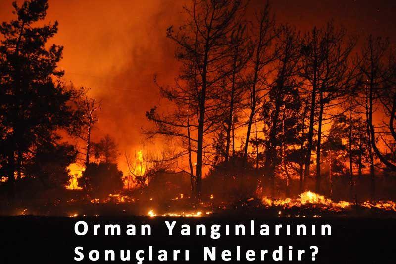 Orman yangınlarının sonuçları nelerdir